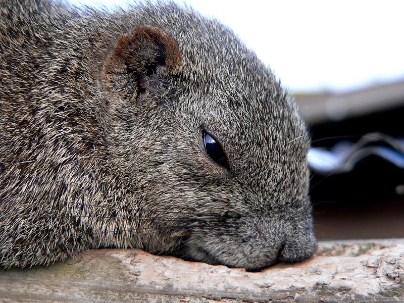 http://lj2.karlson.ru/Oshima/katinka/squirrel01_l.jpg