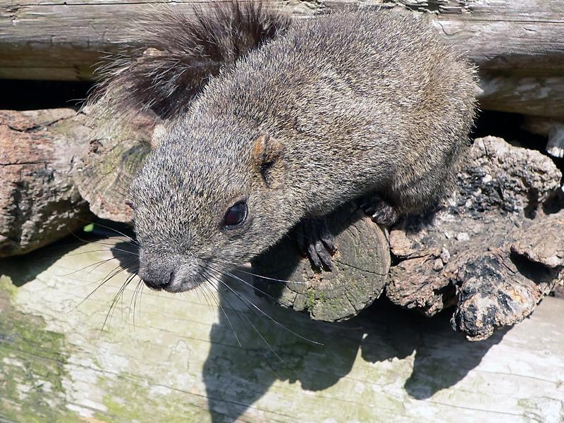 http://lj2.karlson.ru/Oshima/katinka/squirrel07_l.jpg